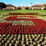 Stanford Regional Anesthesiology and Acute Pain Medicine Fellowship